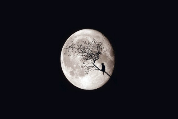 Gato en una rama observando la gran luna