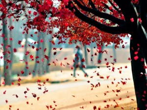 Postal: Caen las hojas en otoño