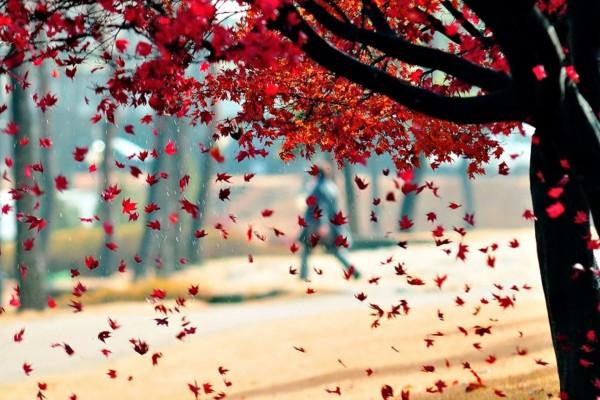 Caen las hojas en otoño