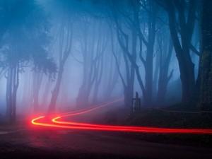 Luces en una carretera en la oscuridad del bosque