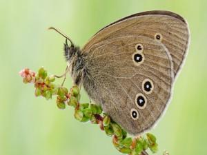 Una mariposa sobre una ramita con brotes