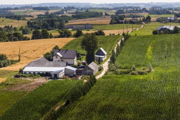 Casas rodeadas de cultivos agrícolas