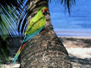 Un loro verde en el tronco de una palmera