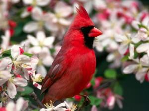 Postal: Un cardenal entre las flores