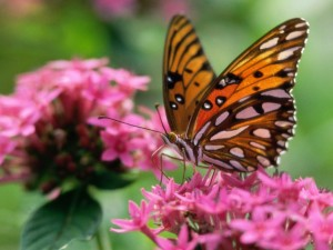 Postal: Mariposa posada en las pequeñas flores rosas