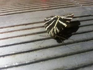 Una mariposa extraña