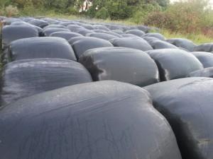 Bolas de silo en una campa