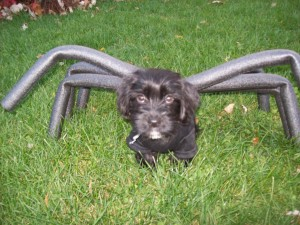 Postal: Un perro disfrazado de araña