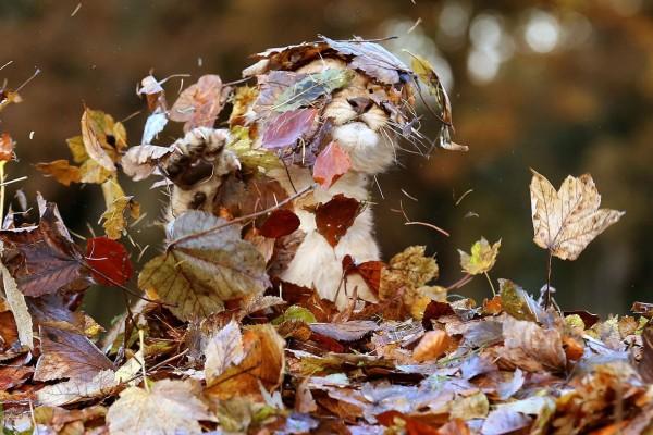 Pequeño león cubierto de hojas otoñales
