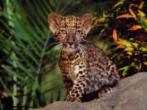 Un cachorro de leopardo con ojos tristes