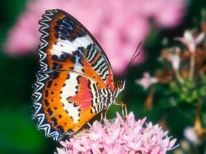 Las patas de una mariposa sobre las pequeñas flores rosas