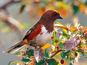 Un pájaro sobre una rama con hojas y flores