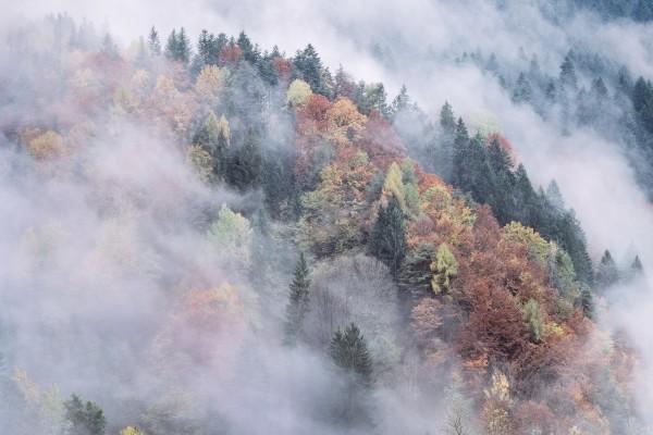 Bosque en otoño cubierto de niebla