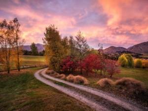 Camino con árboles otoñales