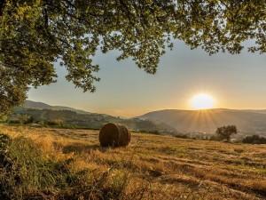 Los rayos del sol iluminan el campo