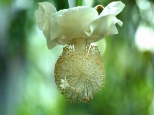 Una extraña flor blanca