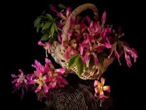 Una cesta con magníficas flores sin tallo