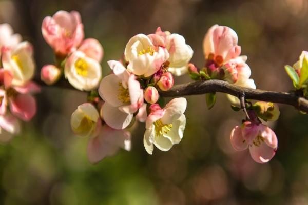 Una rama con bellas flores y hojas