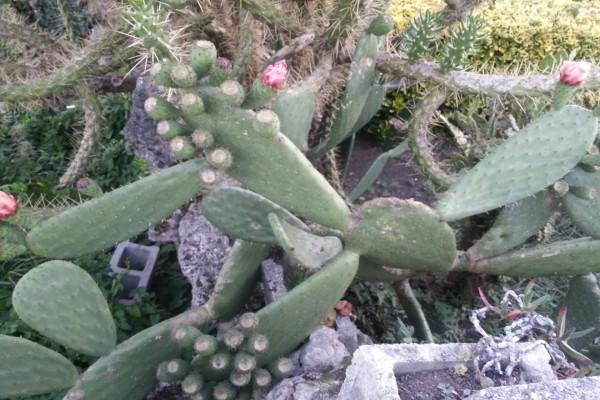 Piedras entre los cactus