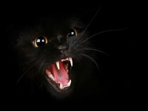 Postal: Un gato negro enfurecido