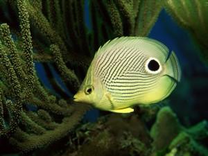 Un pez con una mancha negra