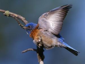 Postal: Pájaro mostrando un ala