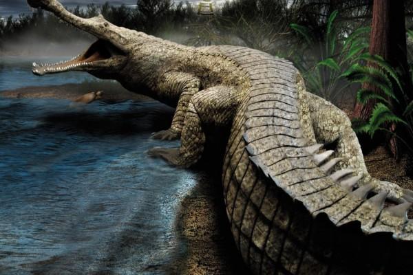 Un gran cocodrilo en la selva