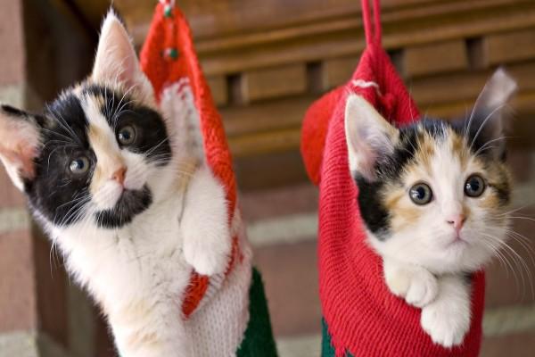 Gatos dentro de unos calcetines
