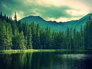 Montañas y pinos junto a un lago