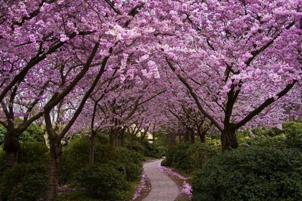 Arbustos y árboles con flores rosas junto al camino
