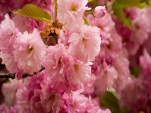 Postal: Magníficas flores rosas en una rama