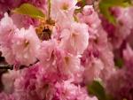 Magníficas flores rosas en una rama