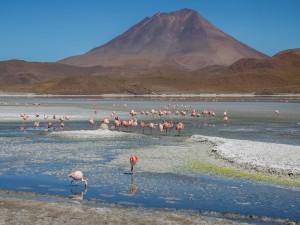 Postal: Flamencos en un lago de Bolivia