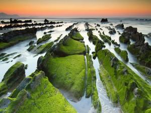 Musgo sobre las rocas del mar