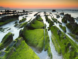Postal: Musgo sobre las rocas del mar