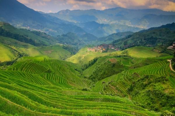 Plantaciones en las colinas