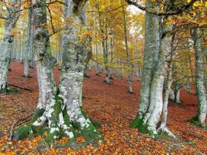 Bosque otoñal en una pendiente