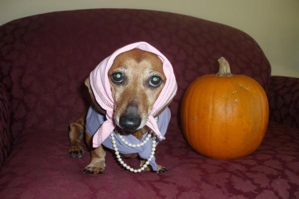 Un perro disfrazado en la noche de Halloween