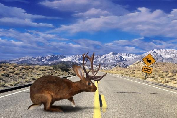 Jackalope cruzando la carretera