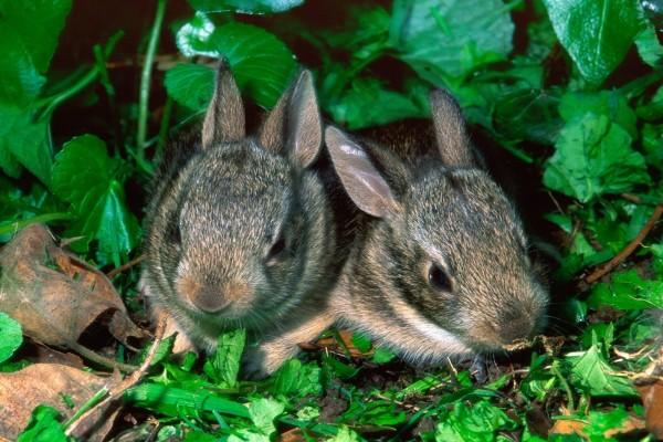 Dos pequeños conejos escondidos entre las plantas