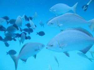 Peces en el océano