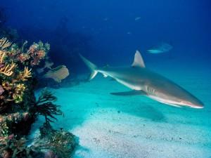 Postal: Tiburones en el fondo marino