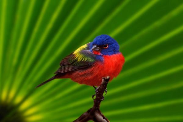 Un pájaro de bonitos colores sobre una rama