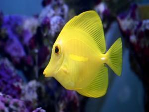 Un bonito pez amarillo
