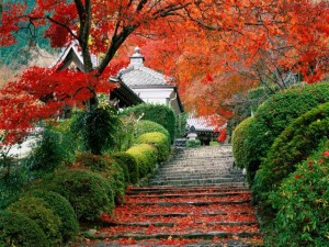 Postal: Escaleras con hojas otoñales