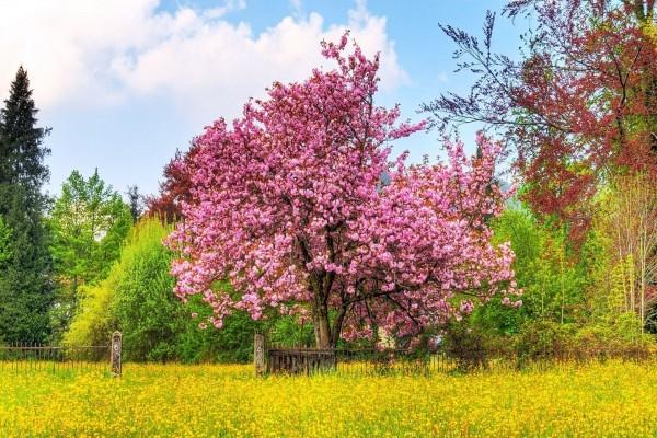 Magnífica magnolia en primavera