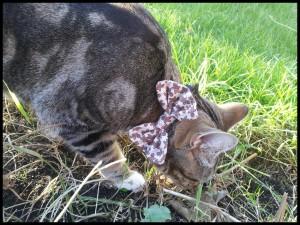 Gato con una pajarita de hombrecillos de jengibre