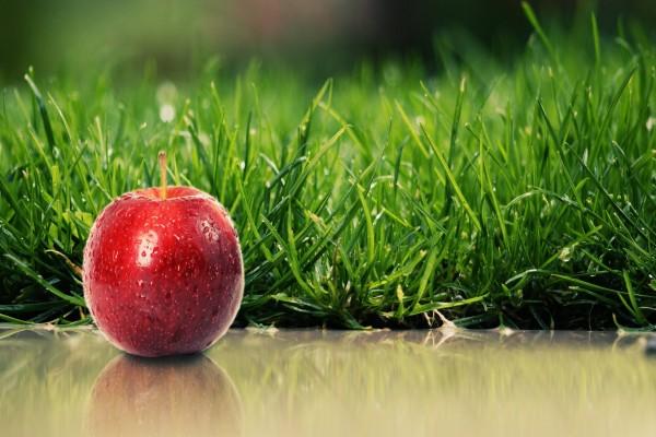 Una pequeña manzana roja junto al césped