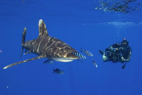 Buzo fotografiando a un gran tiburón