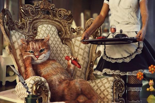 Un gato marqués